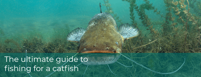 Ultimate Guide to Fishing for a Catfish